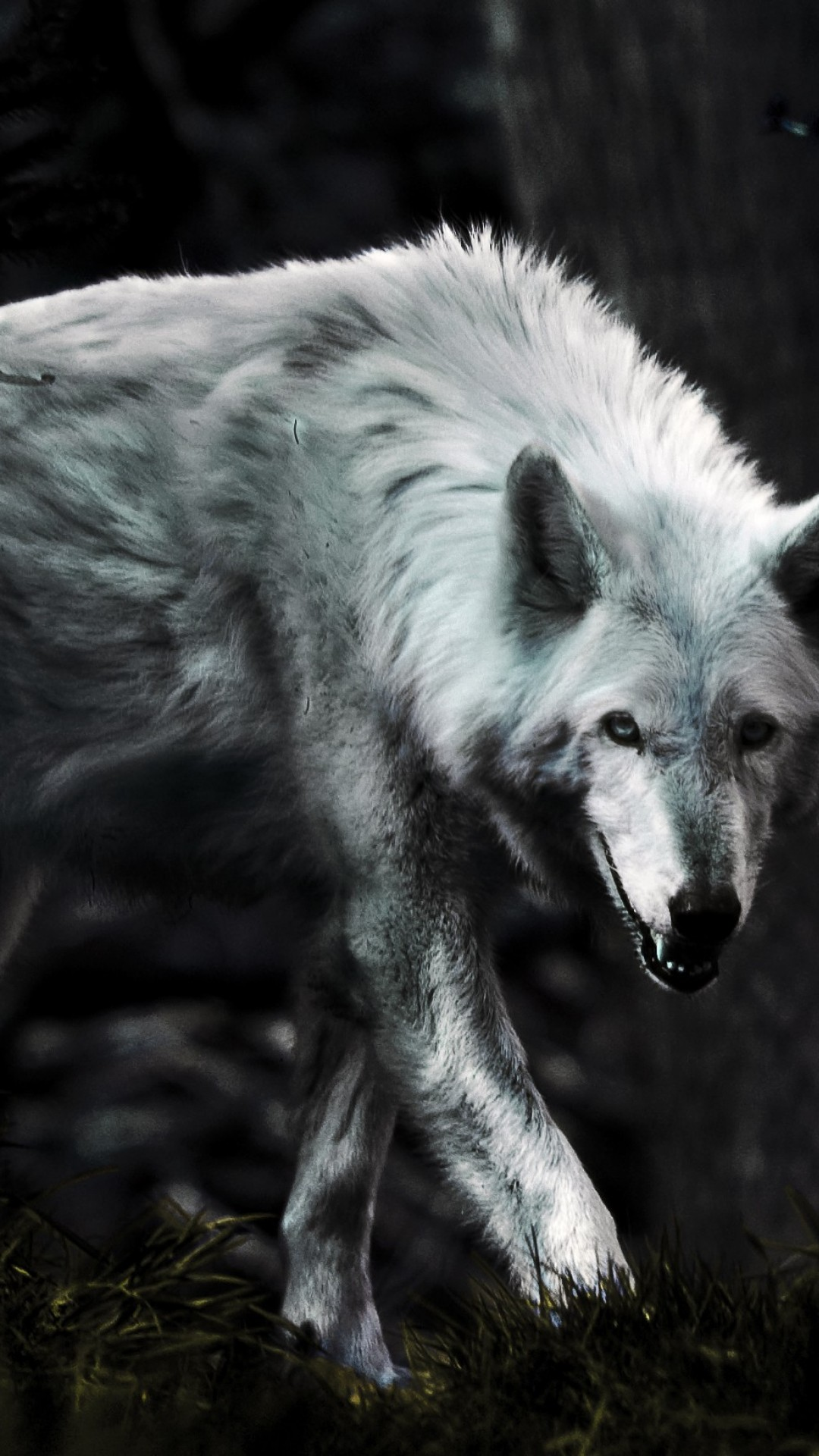 wallpaper loup fond - photo #39