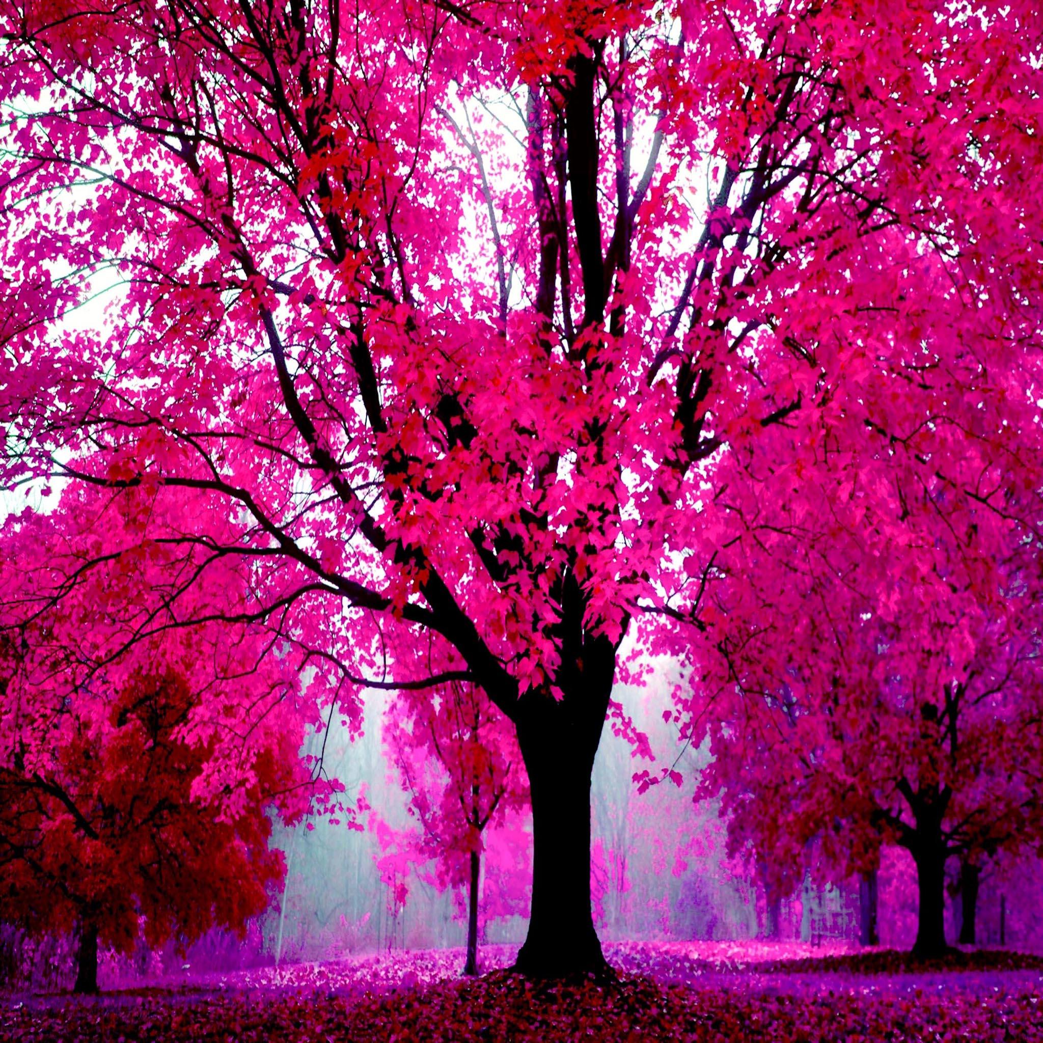 Fond d 39 cran ipad automne rose 2048x2048 gratuit for Fond ecran rose
