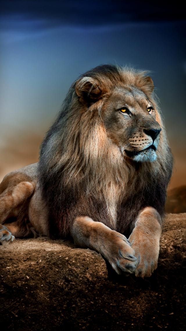 Extrêmement Fond d'écran iPhone 5 Lion 640x1136 gratuit IC17
